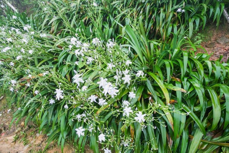 bagni i cespugli verdi con il giglio dei fiori della viola bianca immagini stock