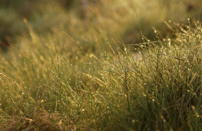 Bagni l'erba fotografia stock
