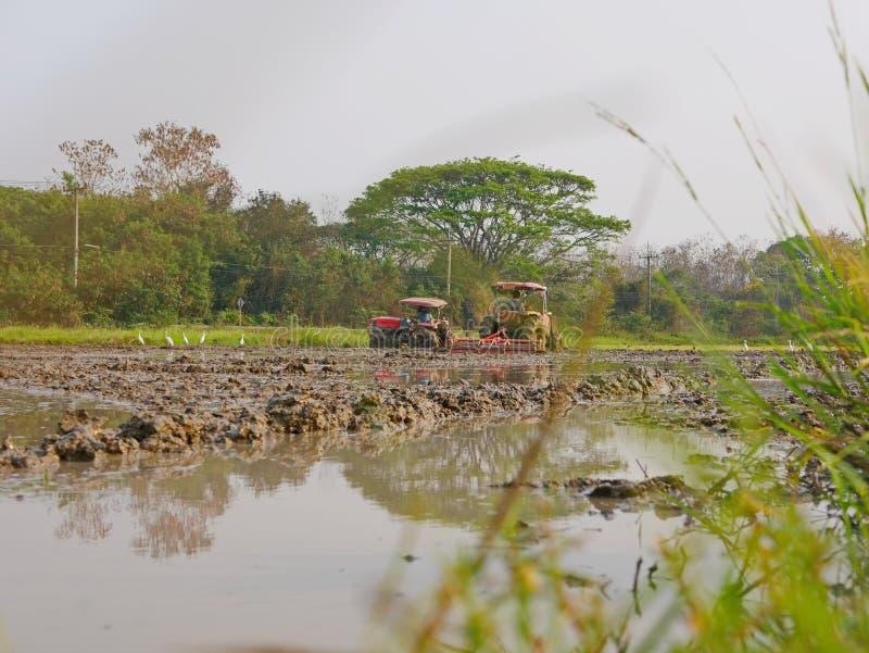 Bagni/suolo sommerso/fangoso in una risaia che è arata dall'trattori nel pomeriggio caldo in una zona rurale in Tailandia immagine stock