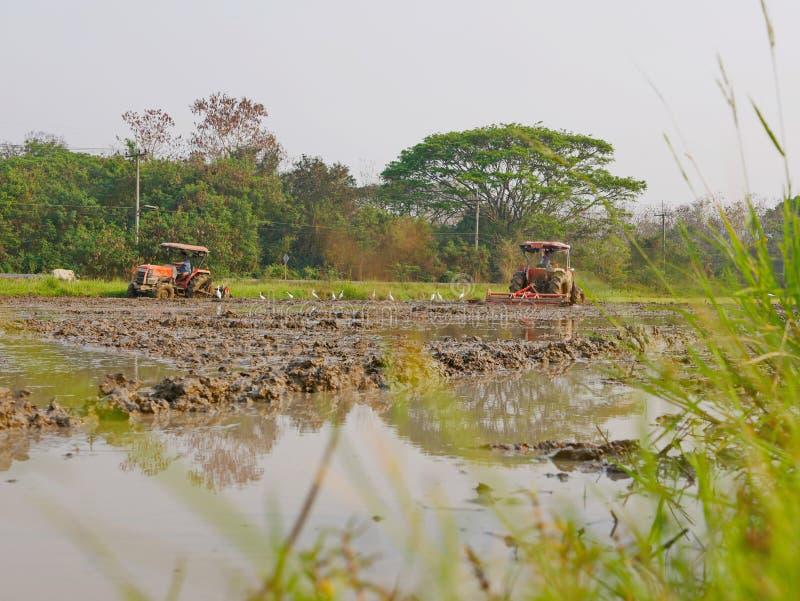 Bagni/suolo sommerso/fangoso in una risaia che è arata dall'trattori nel pomeriggio caldo in una zona rurale in Tailandia immagini stock libere da diritti