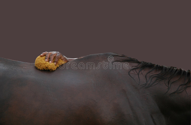 Bagno del cavallo immagine stock