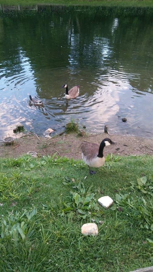 Bagno dell'uccello immagine stock