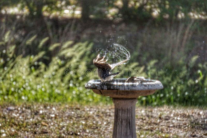 Bagno dell'uccello fotografie stock