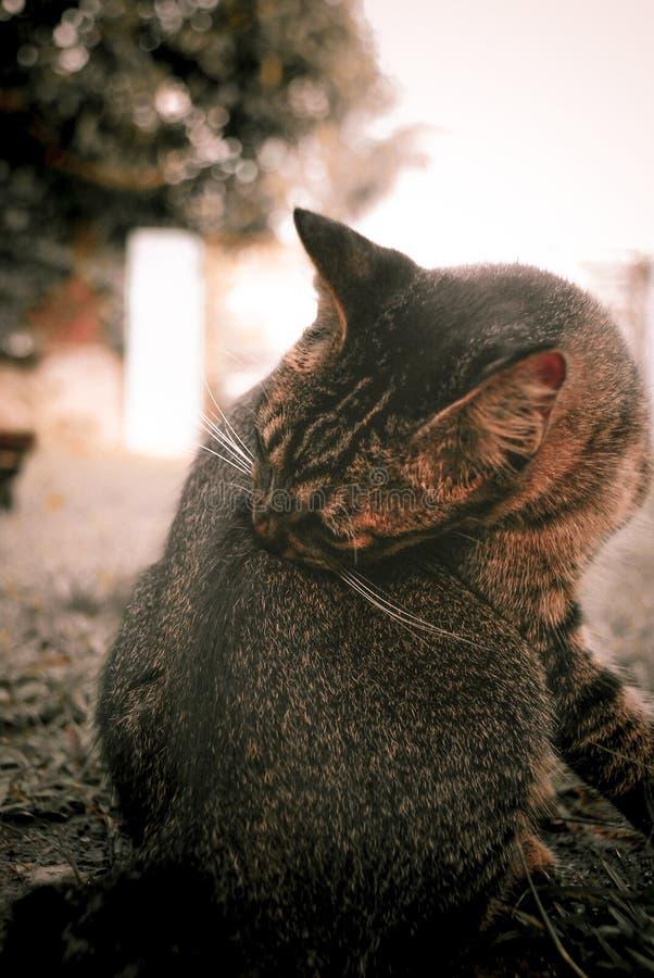 Bagno della presa del gatto fotografia stock libera da diritti