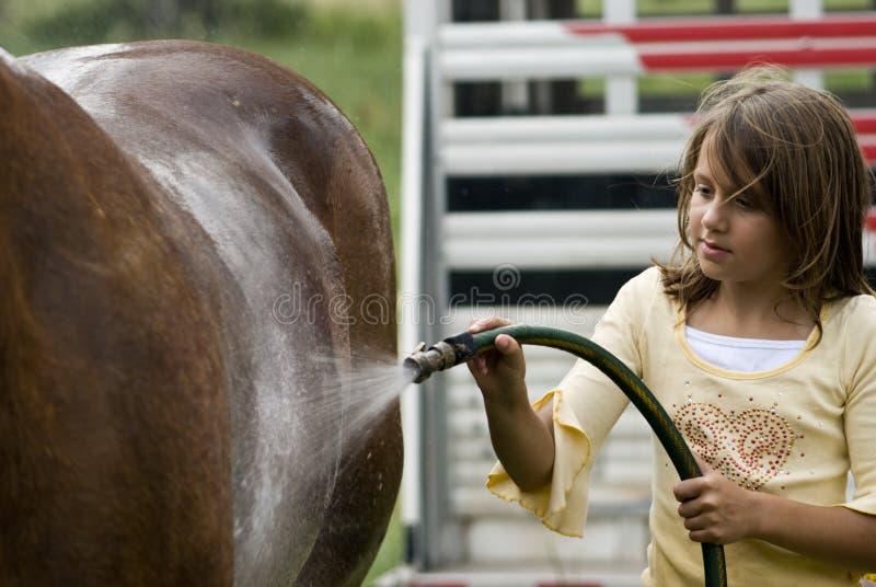 Bagno di rinfresco del cavallo fotografia stock libera da diritti