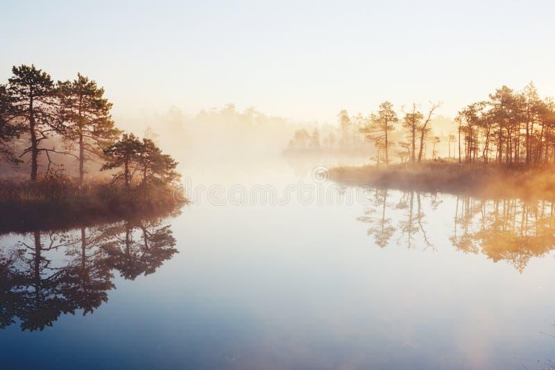 Bagno jezioro fotografia royalty free