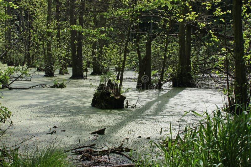 Bagno krajobraz, wyspa Ruegen obrazy royalty free