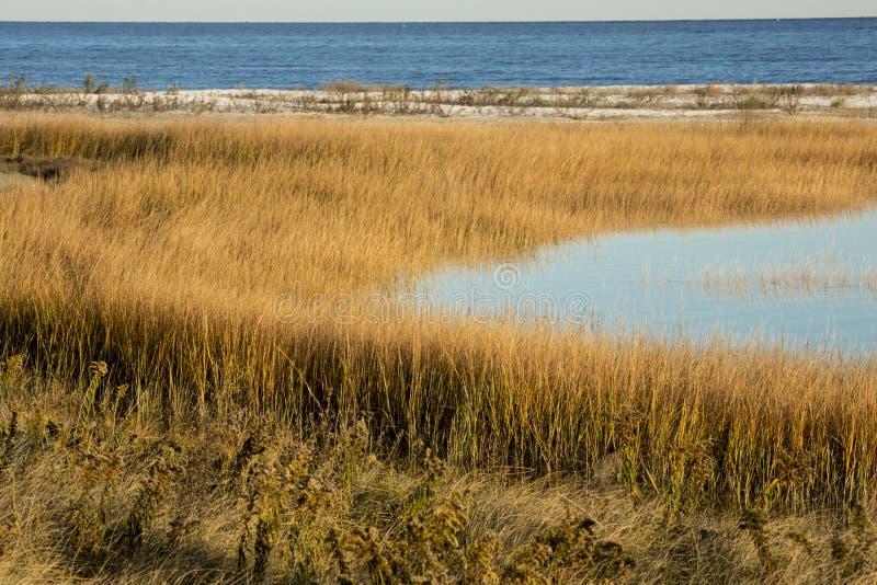 Bagno trawy przy zmierzchem w spadku przy Milford punktem, Connecticut zdjęcie stock