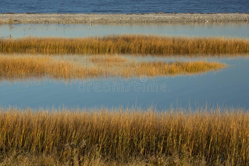 Bagno trawy przy zmierzchem w spadku przy Milford punktem, Connecticut fotografia royalty free