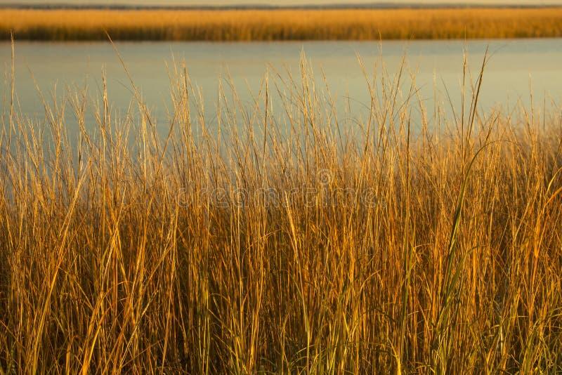 Bagno trawy przy zmierzchem w spadku przy Milford punktem, Connecticut fotografia stock