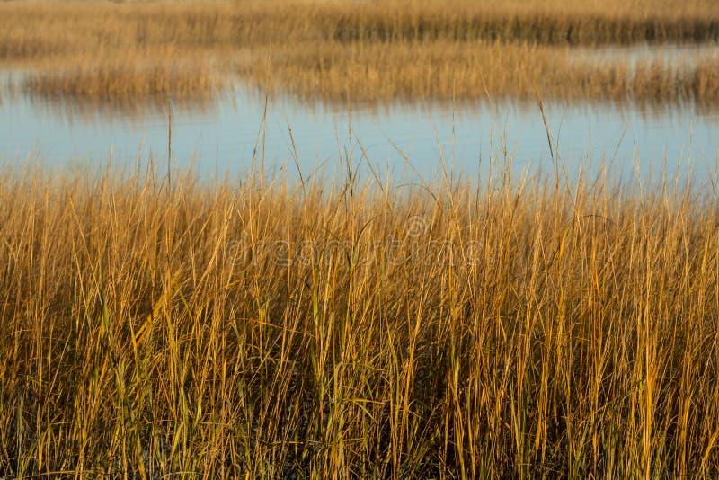 Bagno trawy przy zmierzchem w spadku przy Milford punktem, Connecticut obrazy royalty free