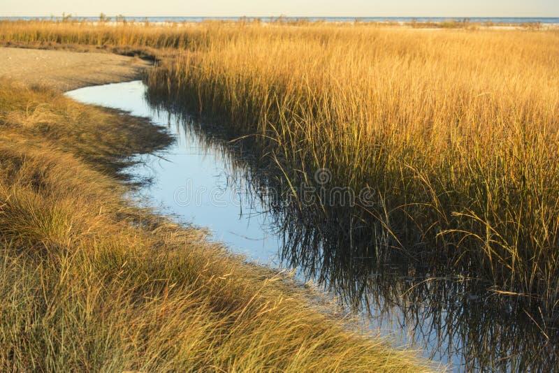 Bagno trawy przy zmierzchem w spadku przy Milford punktem, Connecticut zdjęcia stock