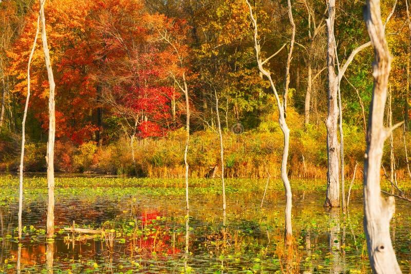 Bagno w jesieni obraz stock