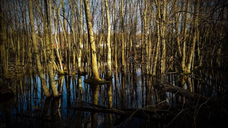 Bagno w Mediolan fotografia royalty free