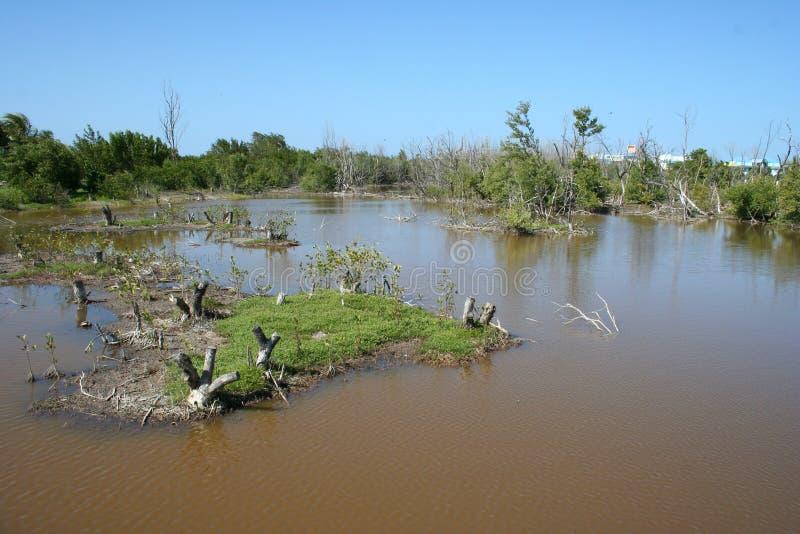 Bagno w tropikalnym parku obrazy stock