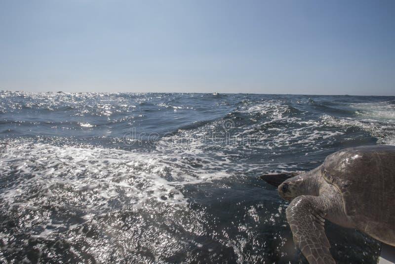 Bahía de Huatulco imagenes de archivo