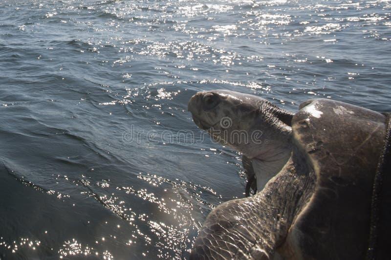 Bahía de Huatulco foto de archivo