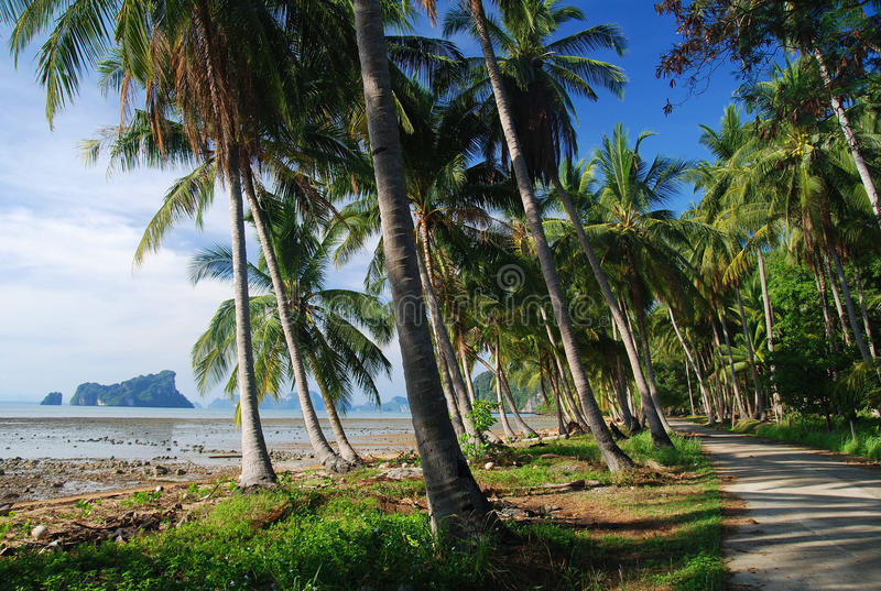 Bahía de la palma de coco fotos de archivo libres de regalías