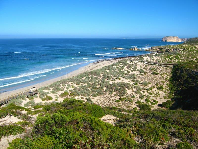 Bahía del sello de la isla del canguro imagen de archivo libre de regalías
