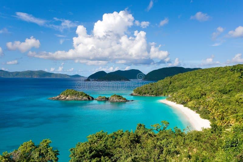Bahía el Caribe del tronco imágenes de archivo libres de regalías