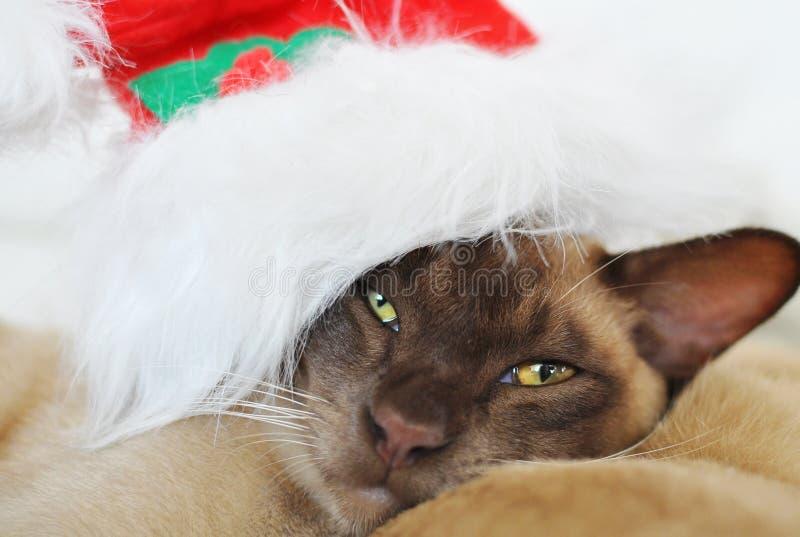 Bah humbug! Gderliwy kot jest ubranym Święty Mikołaj kapelusz zdjęcia royalty free