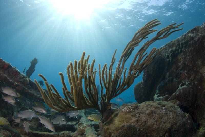 Bahama Korallen-Sonnendurchbruch lizenzfreie stockbilder