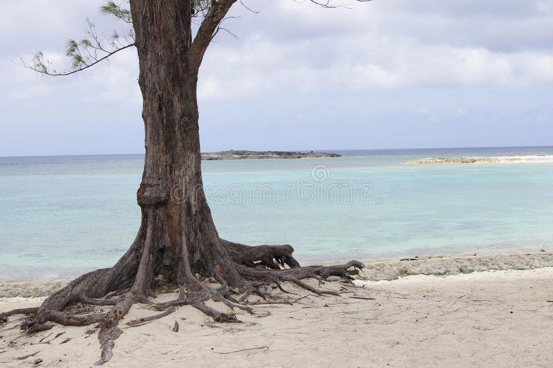 Bahama wyspa fotografia stock