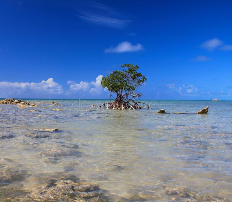 bahamas fotografia stock