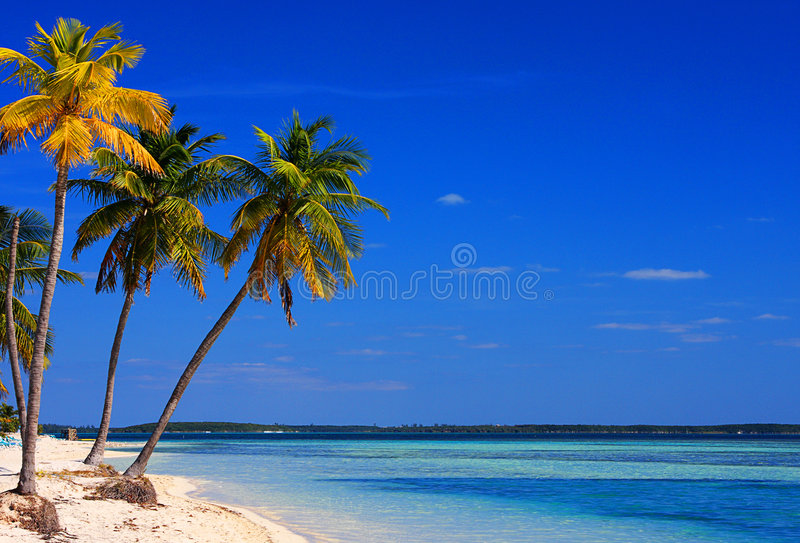 Bahamas Beach royalty free stock photography