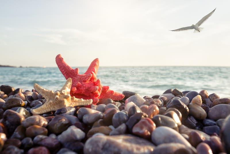 bahamas Nassau fotografii seashore rozgwiazda brać zdjęcie stock