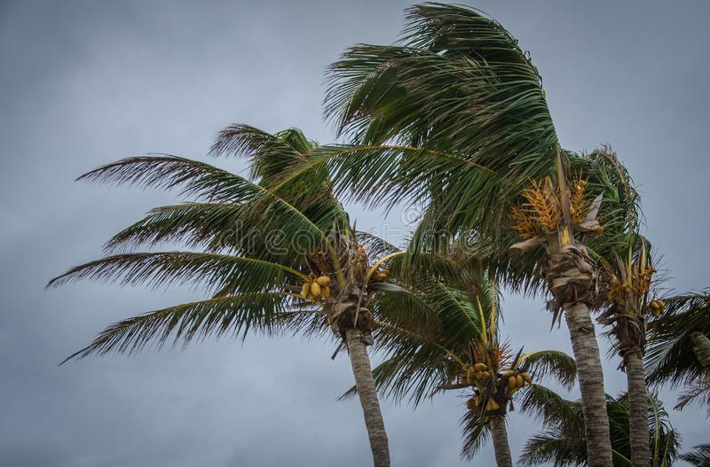 Bahamas orkan royaltyfri fotografi