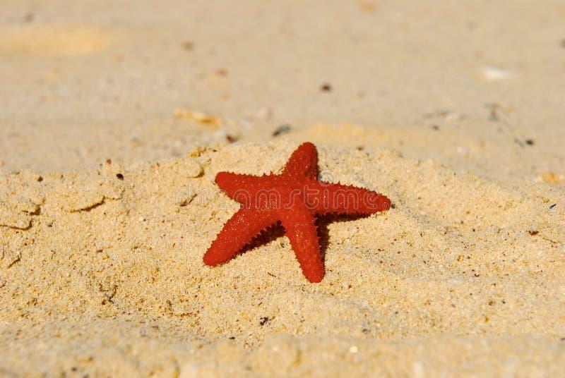 Bahamas-Strand und Stern lizenzfreie stockfotografie