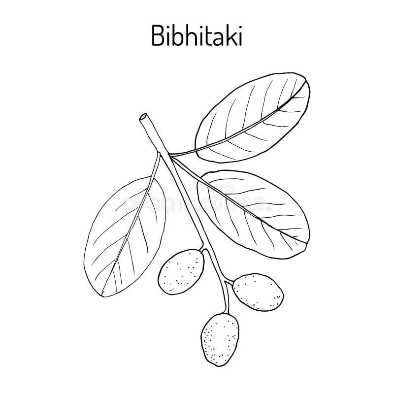 Hand Drawn Hop Plant Vector Illustration