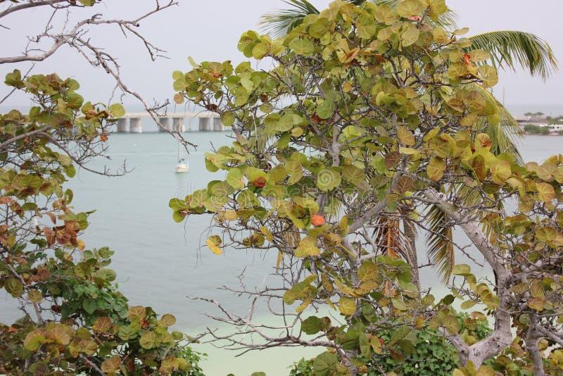 Bahia Honda State Park i Florida royaltyfri bild