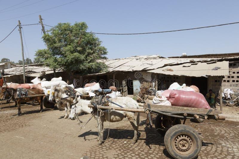 Bahir Dar, Etiopía, el 14 de febrero de 2015: Los carros del burro se colocan en un mercado listo para transportar mercancías imagen de archivo