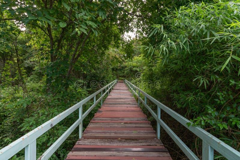 Bahn in den Dschungel Brücke am nebelhaften Reisehintergrund des tropischen Regenwaldes stockbild