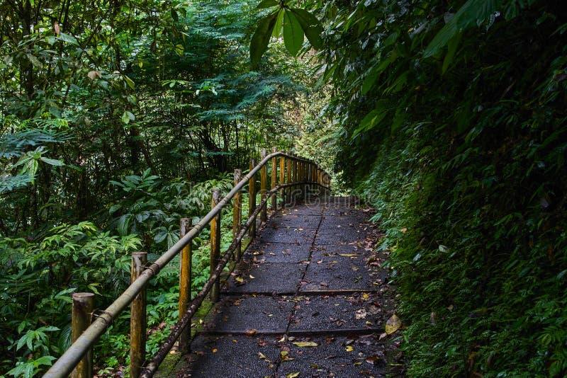 Bahn durch den Dschungel stockbilder