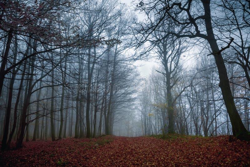Bahn durch den Herbstwald stockfoto