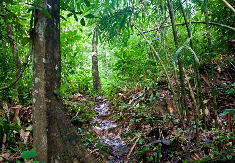 Bahn in einem Dschungel stockbild
