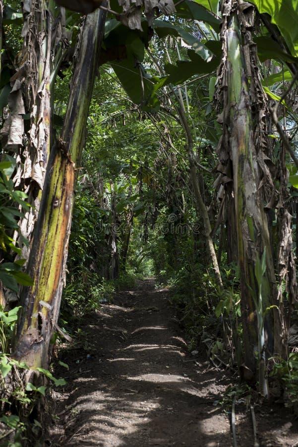 Bahn in einem tropischen Wald der Banane und anderer Bäume lizenzfreies stockfoto