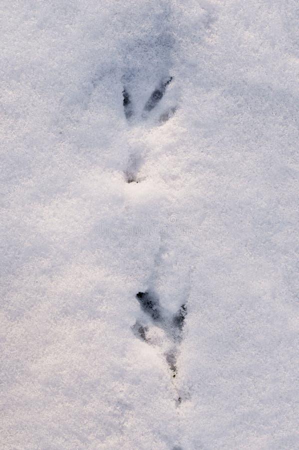 Bahn eines Vogels auf weißem Schnee, Draufsicht Beschaffenheit stockfoto