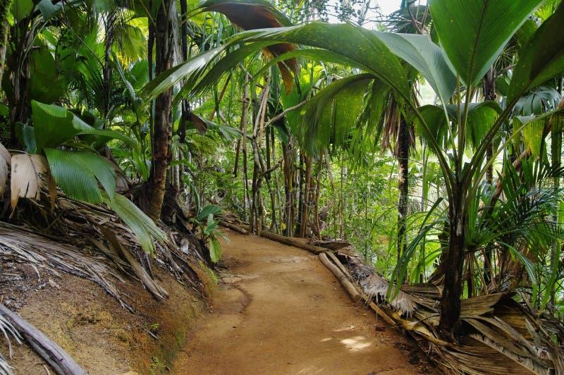 Bahn im Dschungel lizenzfreie stockbilder