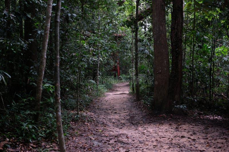 Bahn im Dschungel, der mit Natur umgibt stockbilder