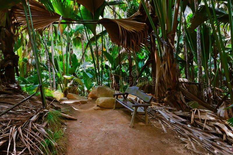 Bahn im Dschungel - Vallee de Mai - Seychellen lizenzfreie stockfotos