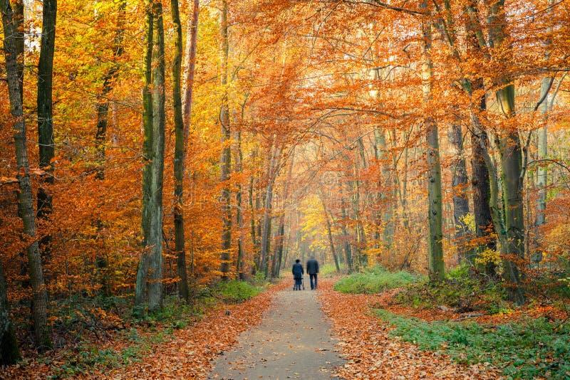 Download Bahn im Herbstwald stockfoto. Bild von schön, laub, landschaft - 26369700