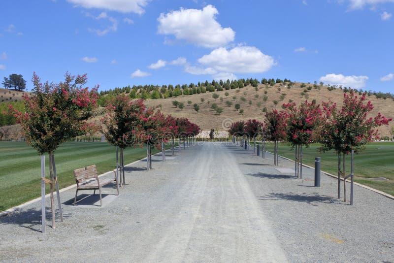 Bahn mit Blumenbäumen am nationalen Arboretum Canberra Australien lizenzfreies stockbild