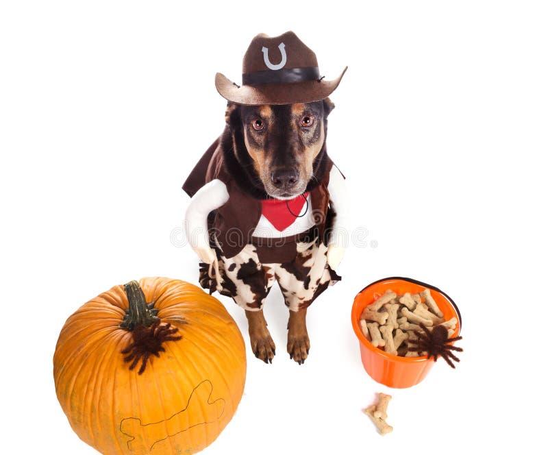 Bahn oder Trick Hund gekleidet als Cowboy nahe bei einem Kürbis und einem a lizenzfreie stockbilder