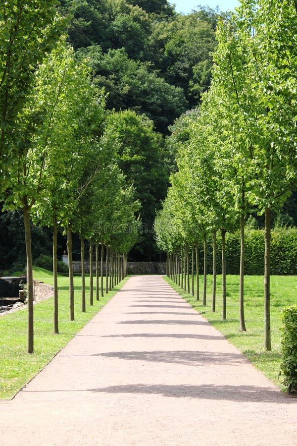 Bahn zwischen den Bäumen stockbild