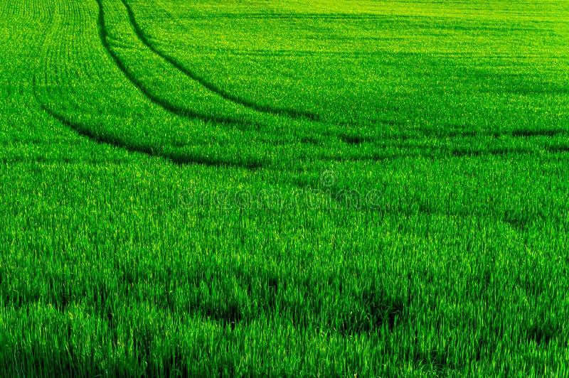 Bahnen auf Bauernhof-Feld stockfotografie