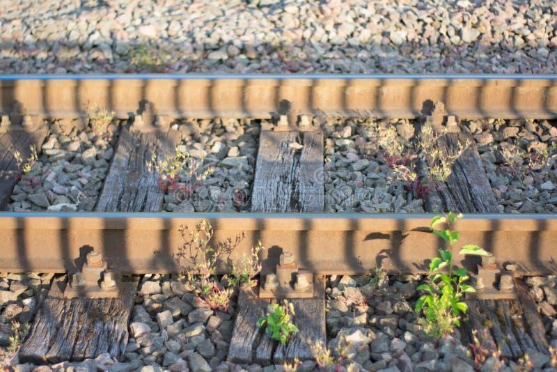 Bahngleise in der goldenen Stunde lizenzfreie stockfotos